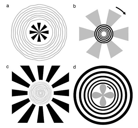 Neural interactions between flicker-induced self-organized visual hallucinations and physical stimuli